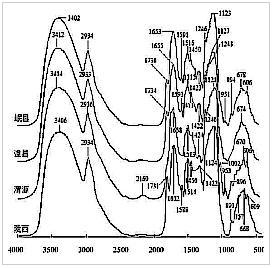 甘肃8个主产县红芪FT-IR指纹图谱