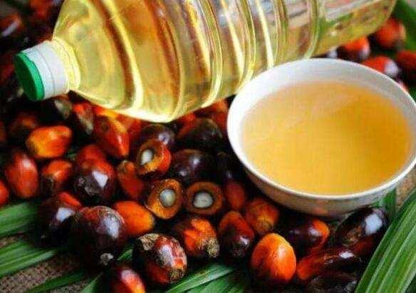 能譜科技工程师分享:红外光谱法在棕榈油中脂肪含量测定上的应用